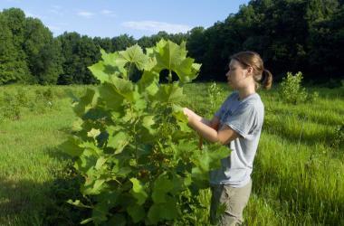Scientist with tree seedling