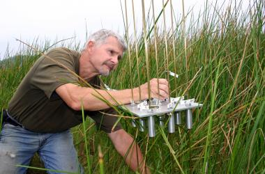 Scientist on Global Change Research Wetland