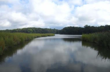 SERC marsh