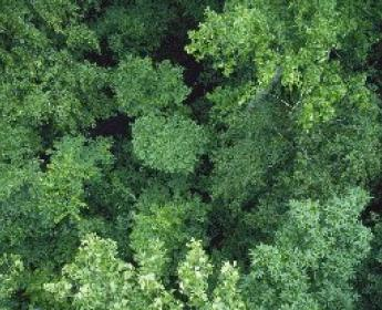 aerial of forest canopy