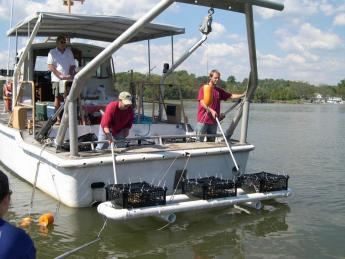 Deploying oyster cages off the R/V SERC