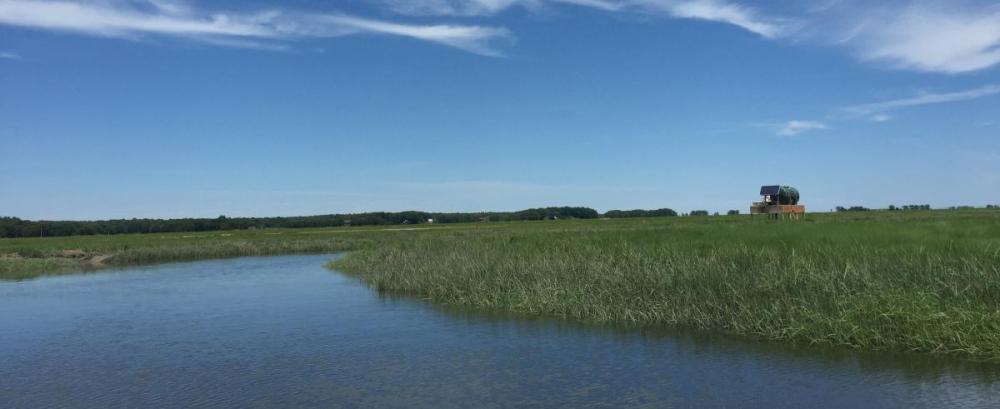 New England tidal Marsh.