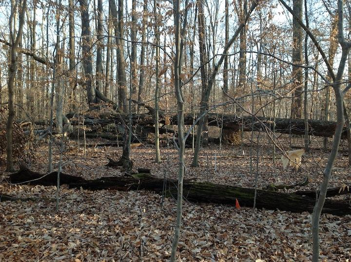 Forest research plot