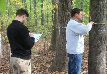 volunteers measure trees