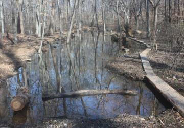 stream after restoration
