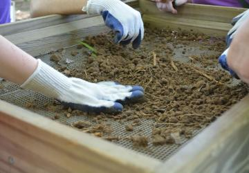 volunteers pick artifacts from a sieve