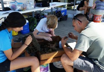 volunteers looking for crabs