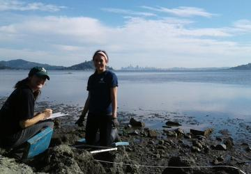 Looking for oyster drills with a view of San Francisco