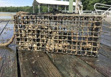 Oyster cage