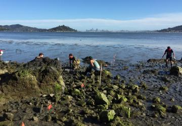 Volunteers helping to remove snails.