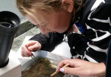 student identifying marine invertebrates
