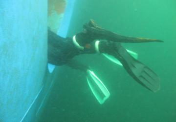 Research divers' fins protrude from a thruster tube as they sample biofouling.