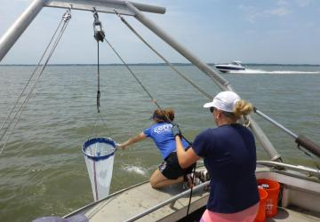 pulling in a plankton net
