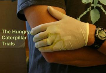caterpillar feeding trials