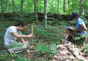 measuring seedlings