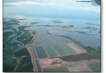 Shrimp Farm