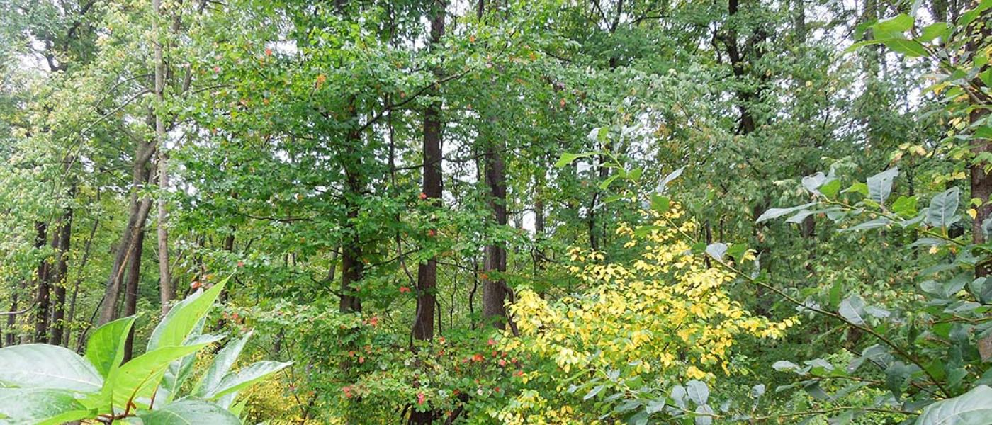Forest with green and yellow leaves