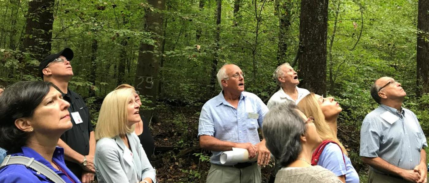 Group gazing up at trees on forest hike