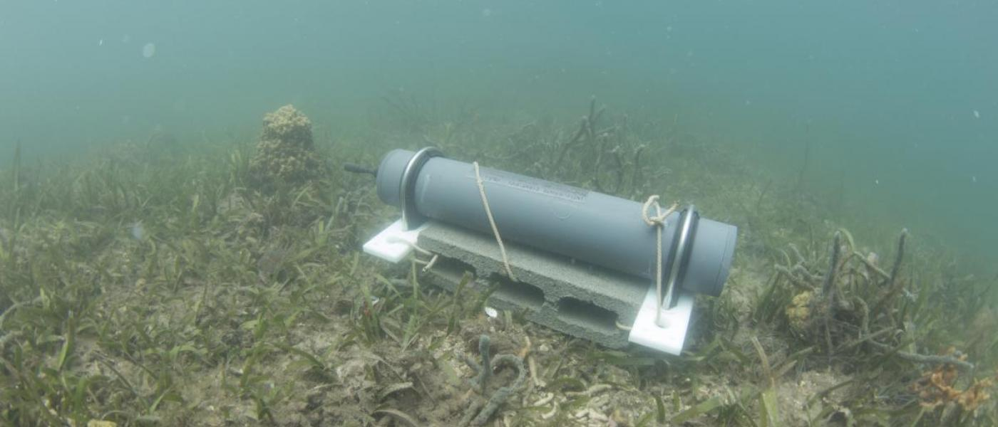 A passive acoustic recorder deployed in a seagrass bed in Panama.