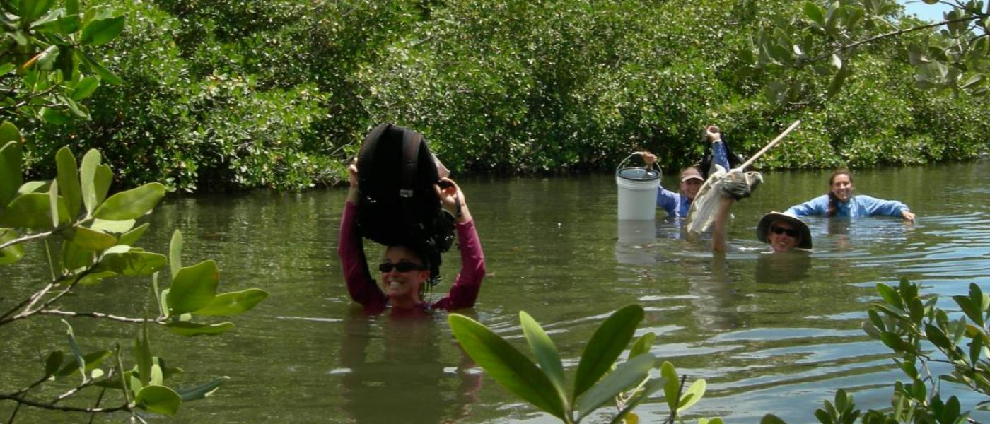 scientists wade through river