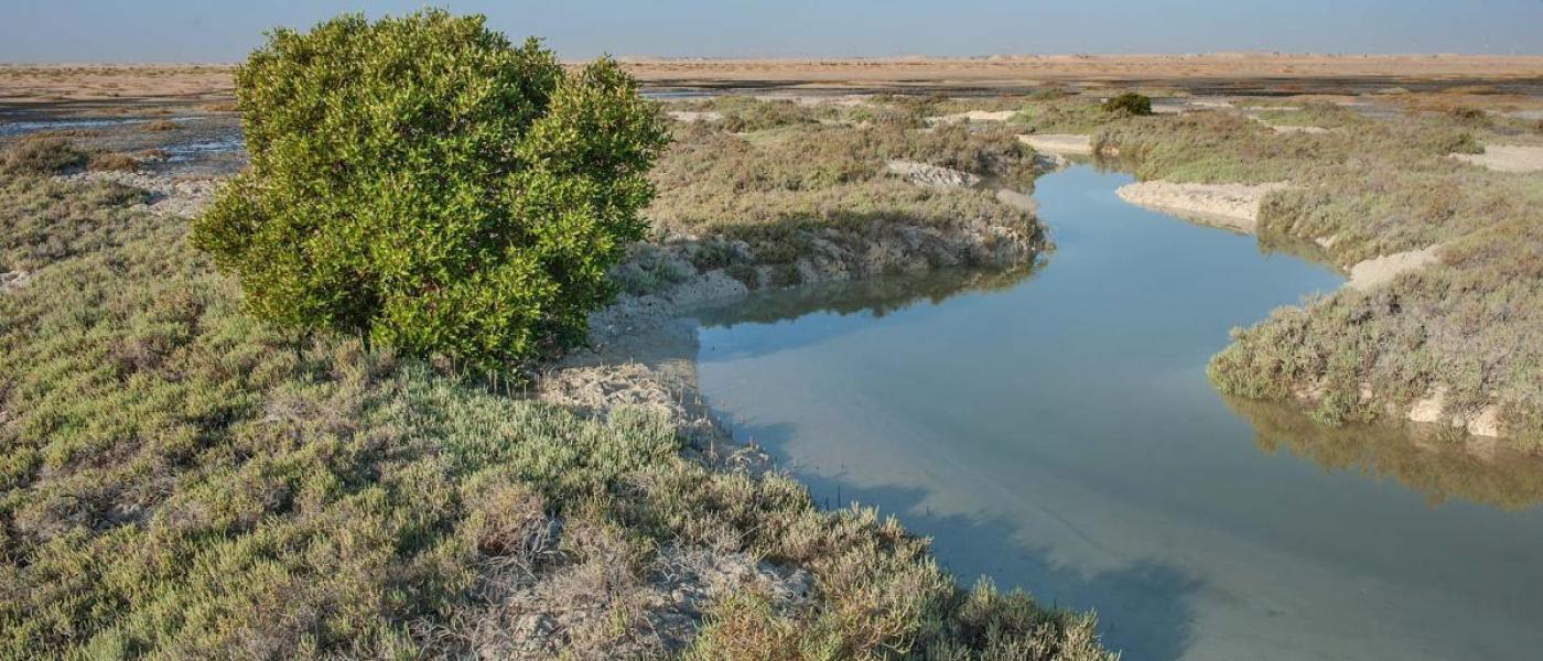 Tidal river in salt marsh near Al Thakhira