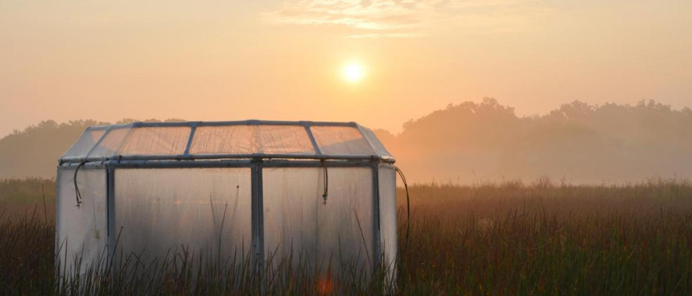 experimental marsh chamber at sunrise