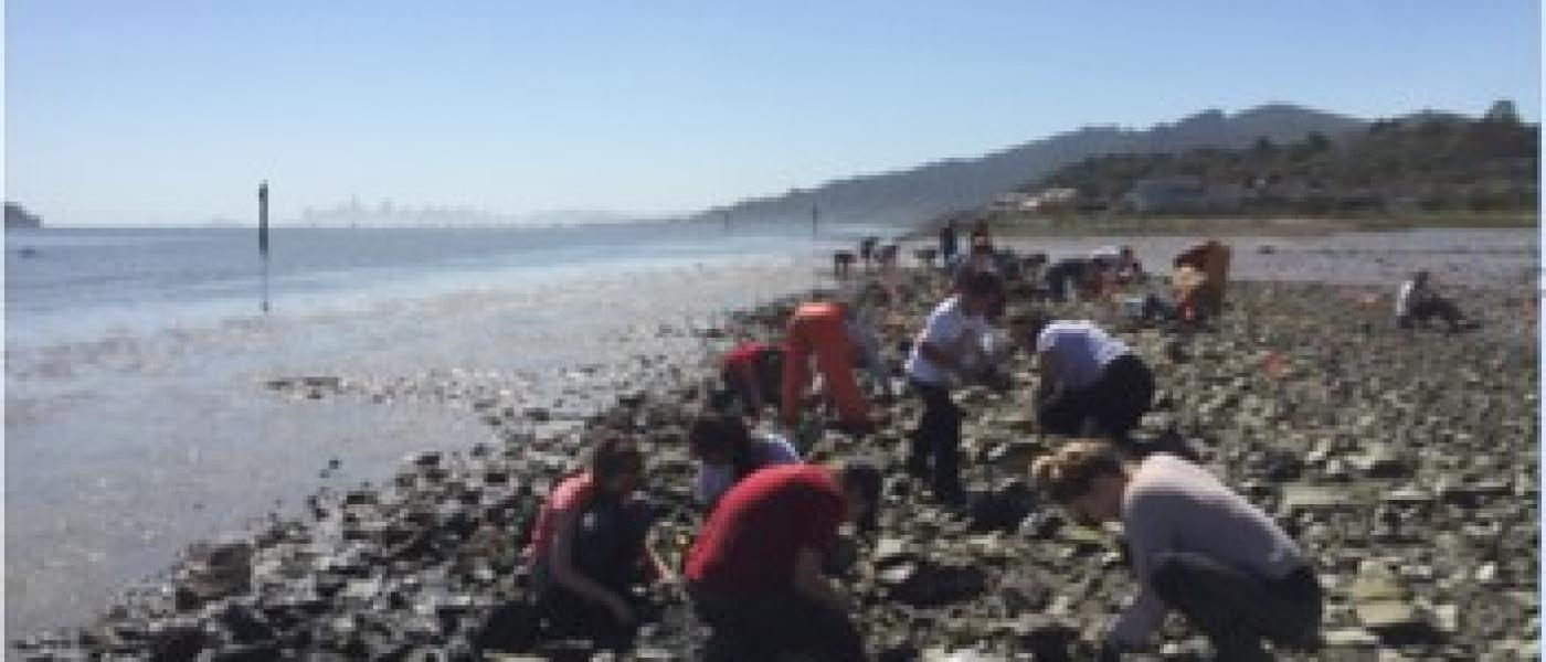 Volunteers removing oyster drills