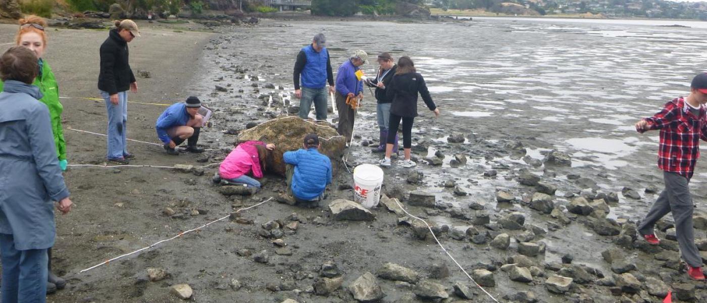 Volunteers measuring snail travel