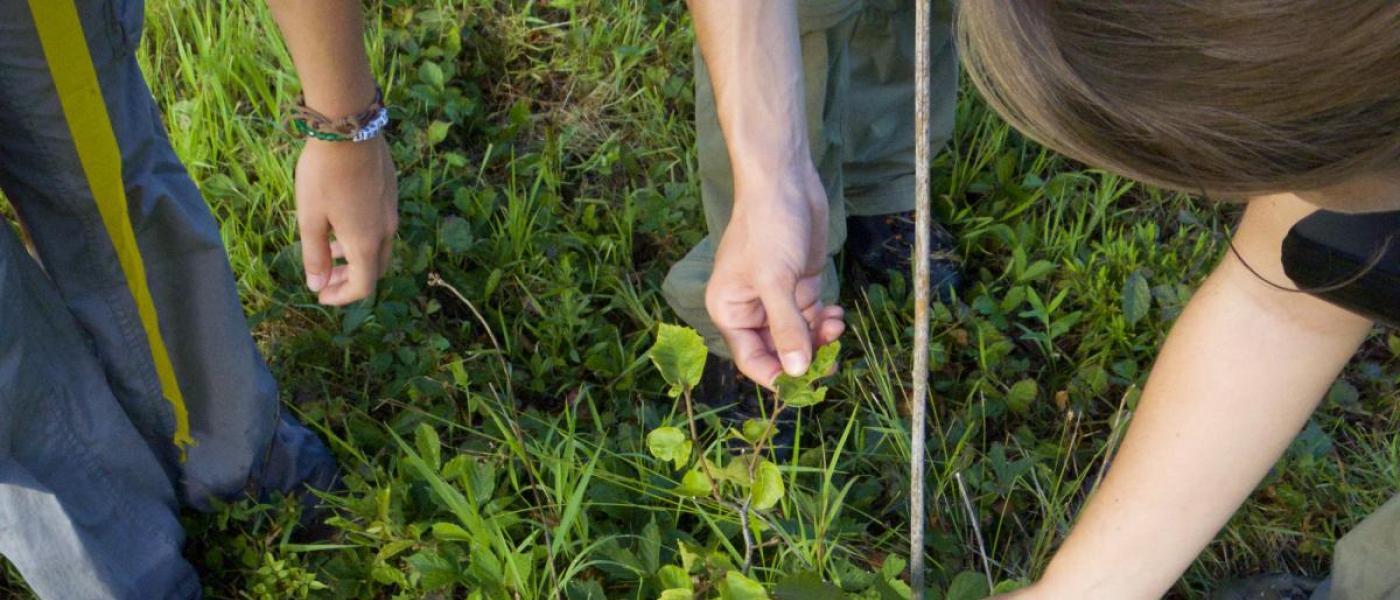 Hands measuring leaf