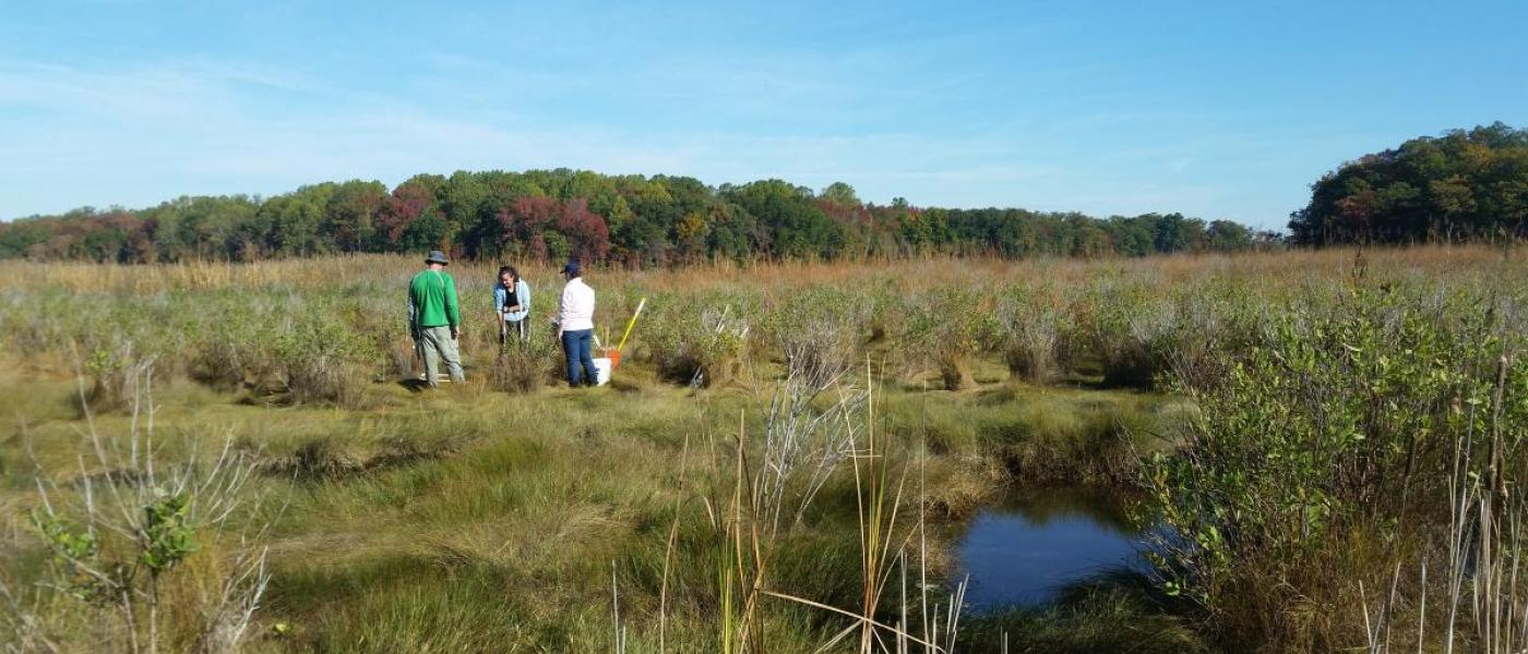 MarineGEO SERC salt marsh survey in Rhode River