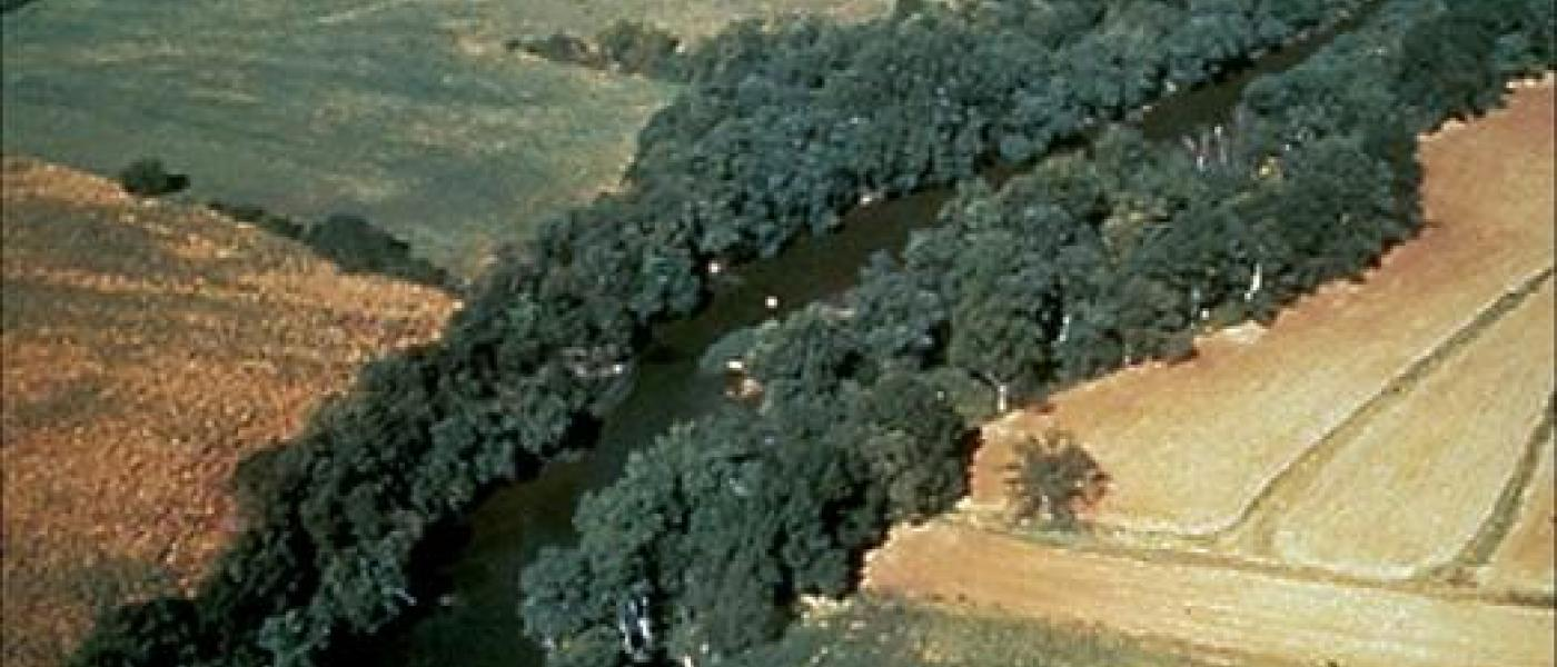 Stream lined by forests in farm fields