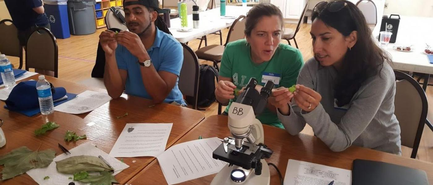Three adults poring over  leaves at a table with a microscope