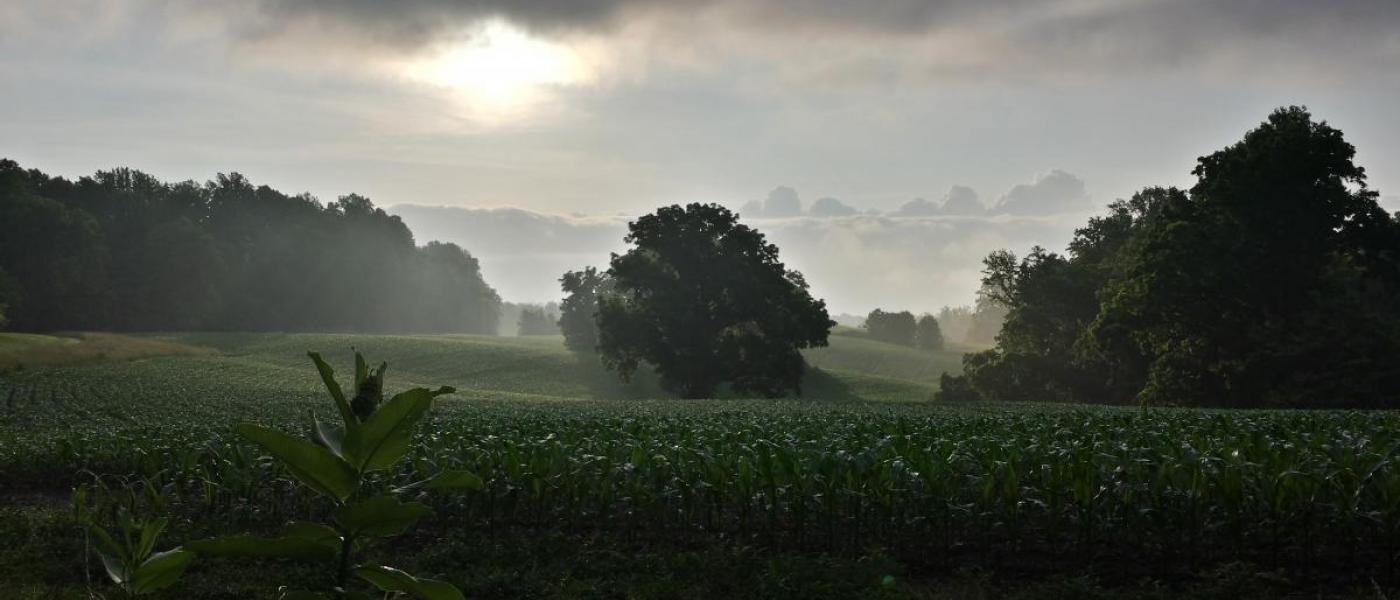 Green cropfield under cloudy sky