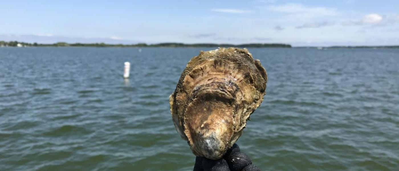 Black gloved hand holds oyster against backdrop of river