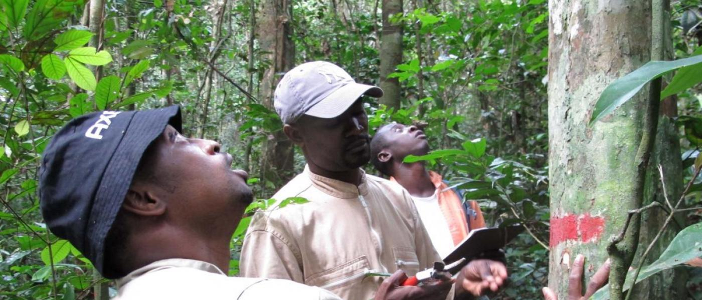 Scientists in Gabon forest plot