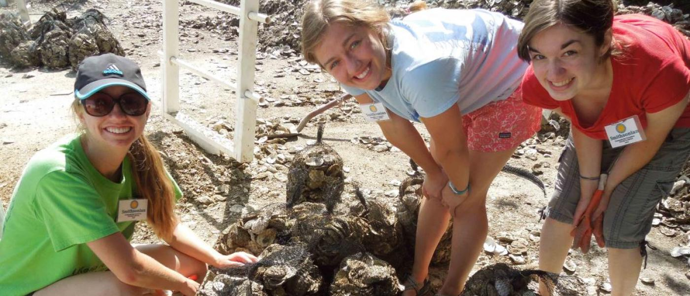 2015 summer interns compete in Oyster Olympics