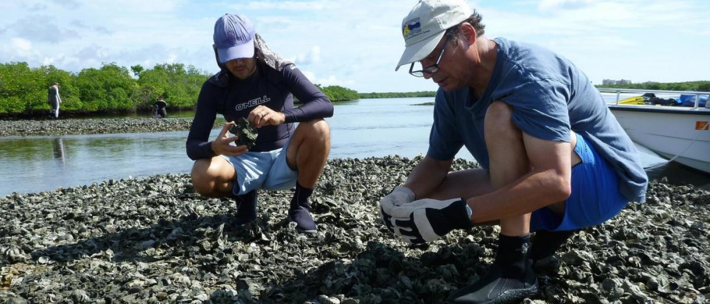 Sampling oyster reef, Florida 2014