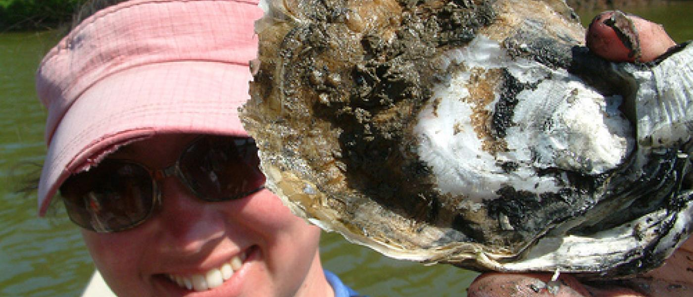 eastern oyster