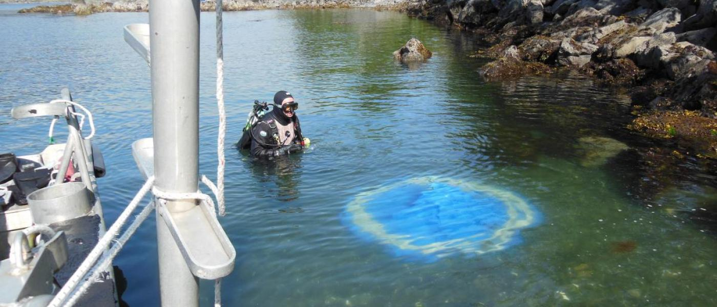 Diver in the water testing out dome treatments