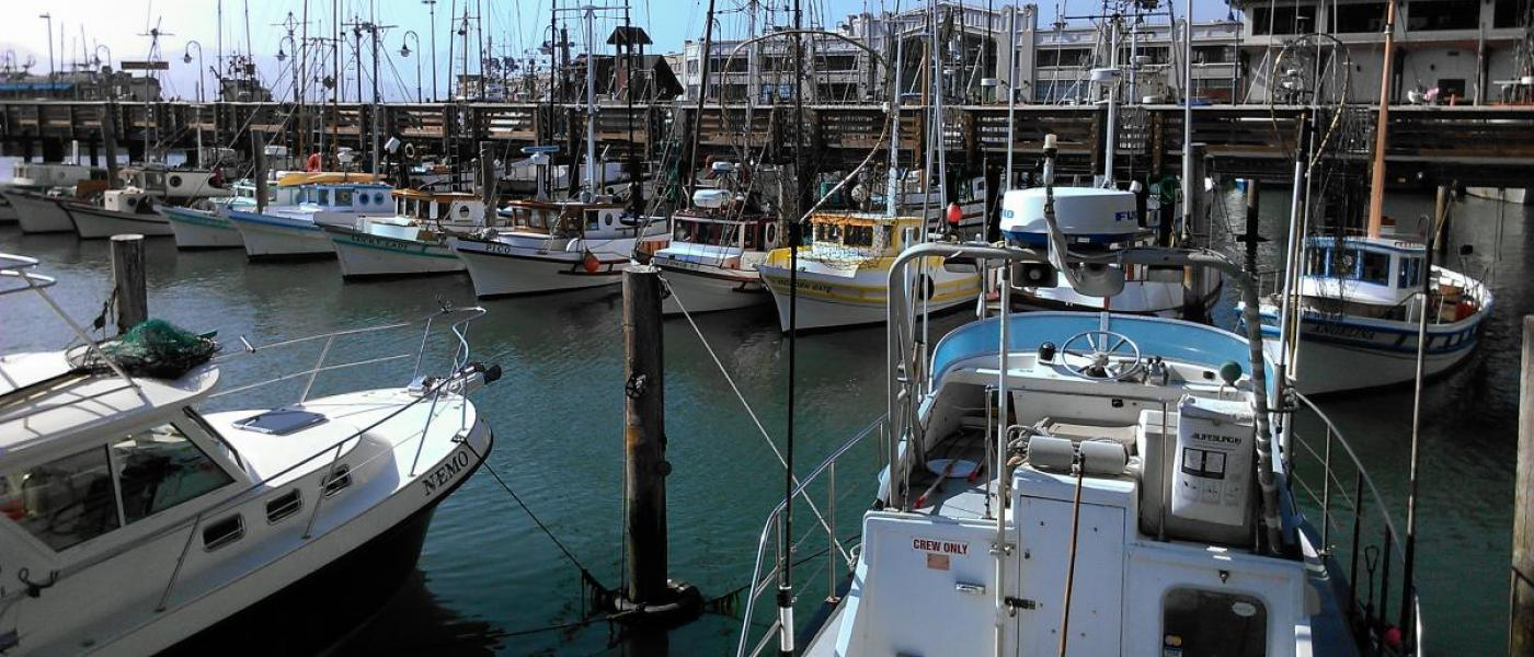 Recreational vessels in a marina