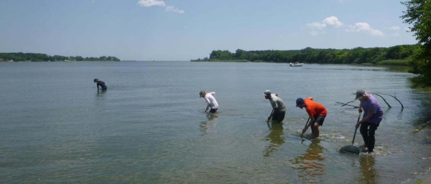 """Dip-net sweeps for shrimp are conducted by staff, interns and volunteers"""" by Stacey Havard"""