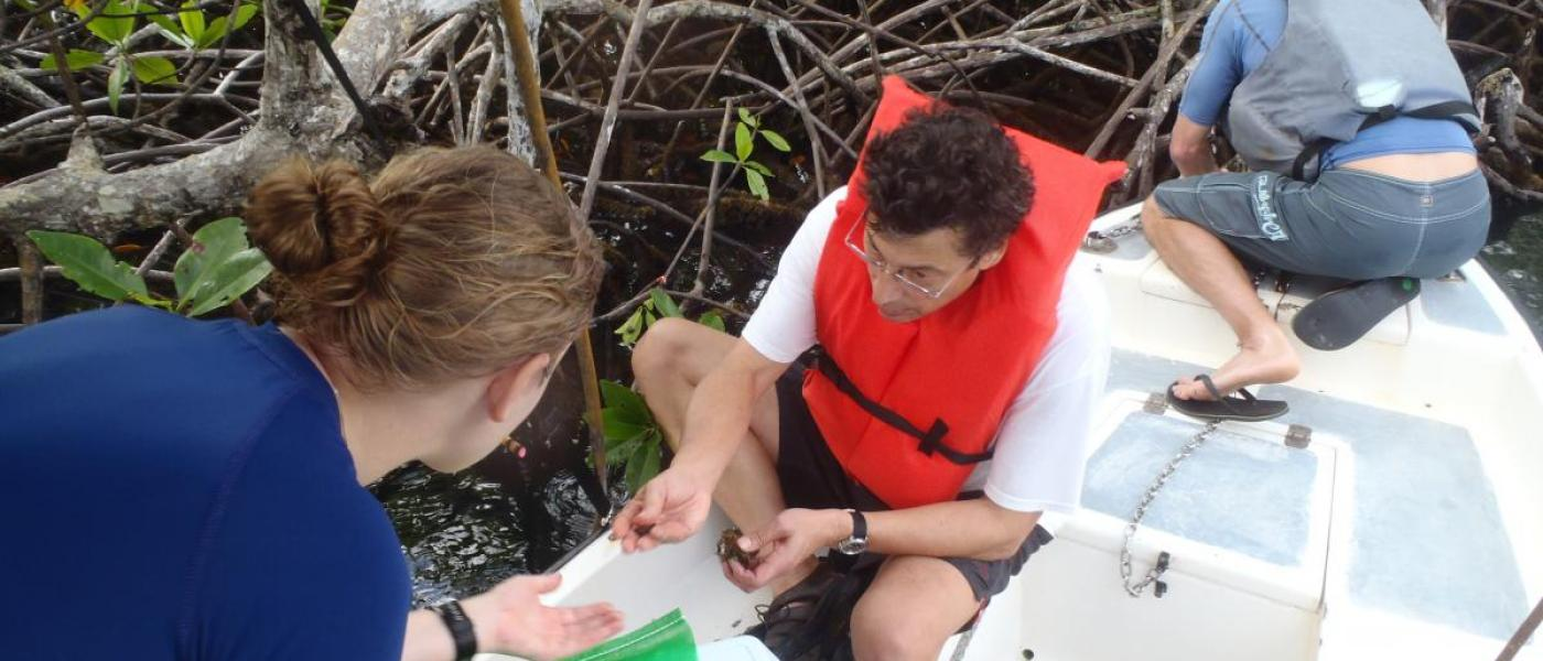 Researchers collecting oysters in Panama