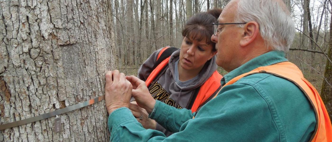 Dr. Jess Parker teaching citizen scientists volunteer how to measure tree circumference