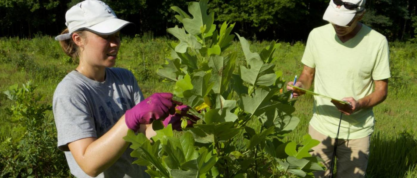 Jamie Smith works with Biodiversitree volunteer