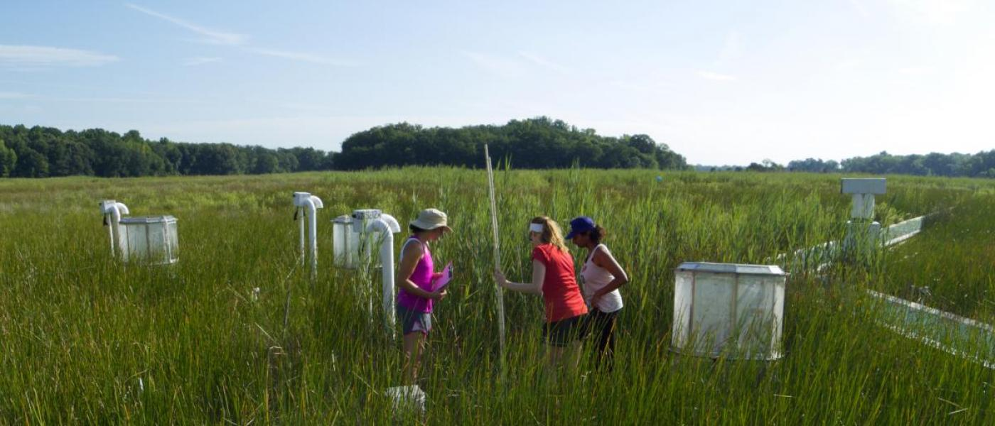 Citizen scientists measuring plants at GCREW site