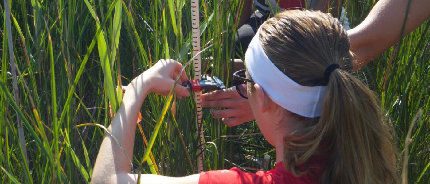 Citizen scientists collecting plant data