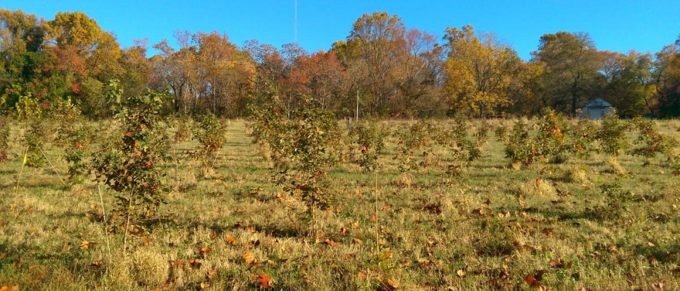 BiodiversiTree plots at SERC