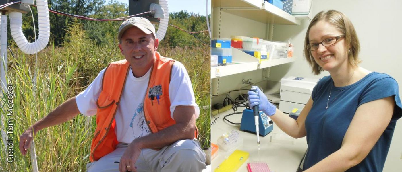 Left: Male scientist in orange work vest kneeling on marsh boardwalk. Right: Female scientist in lab, pipetting samples