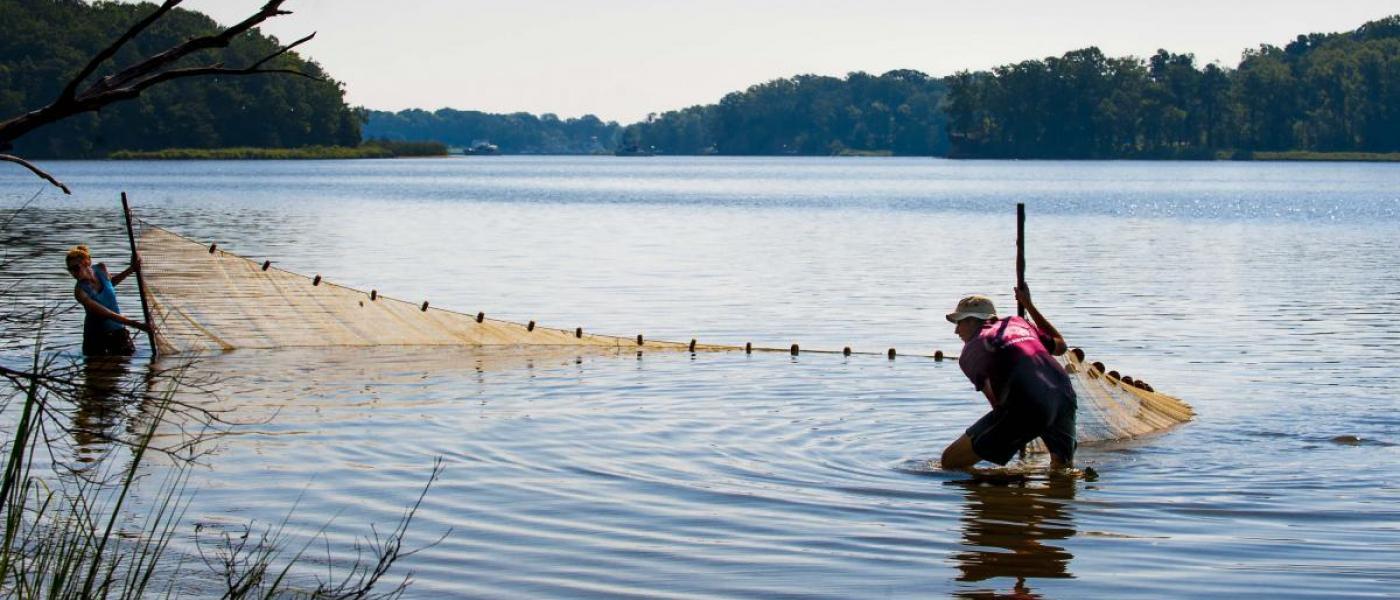 SERC staff seining the Rhode River