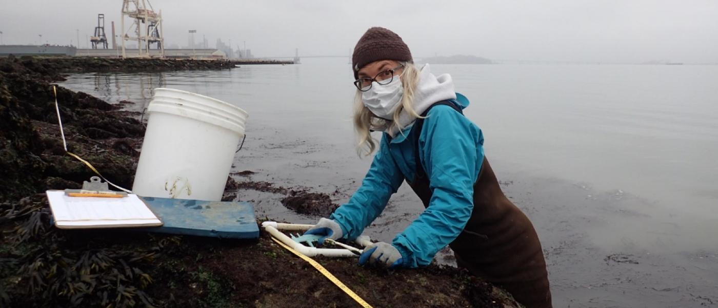 Surveying San Francisco Bay's shore.